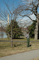 Arborists on the Mall