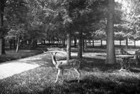 Deer on the Mall